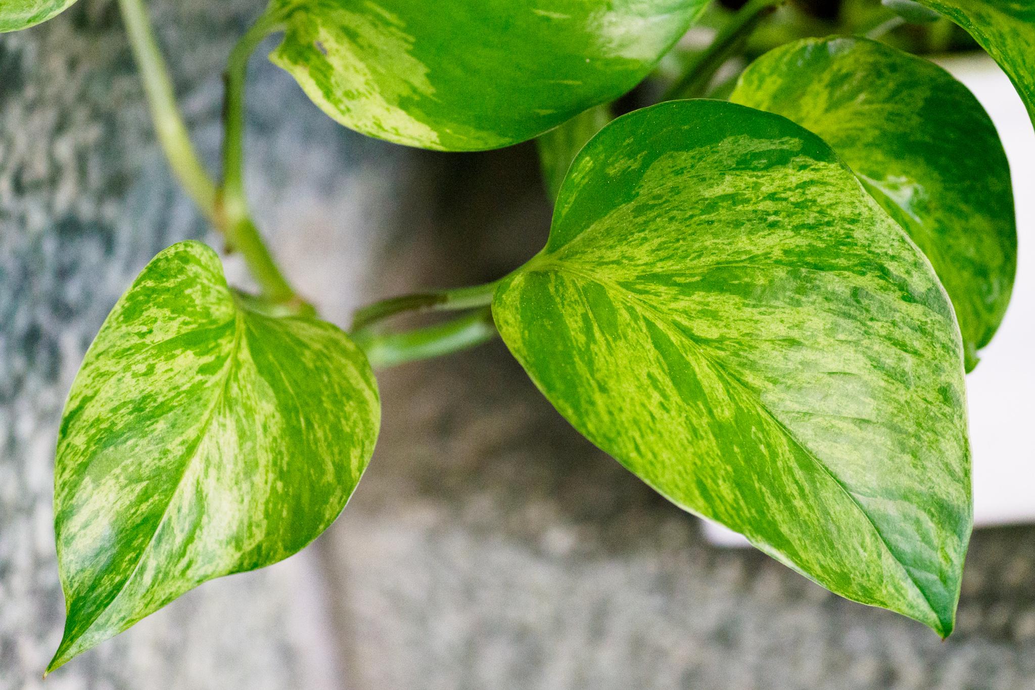 Blätterstruktur