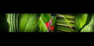 BS-XF-LK2-Ahnig_vo_dr_Botanik-Vogt_Sabine-0.jpg