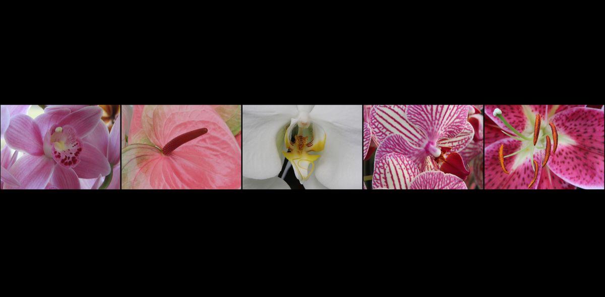 BE-XF-LK3-Blumen_im_Keukenhof_Holland-Zurbruegg_Urs-0.jpg