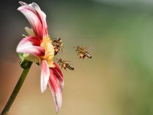 DI-F_1601_917605-Bienen-Seematter_Beat-BR.jpg