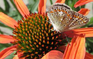 DI-F_1601_440504-Papillon-Brigitte_Michel-BI.jpg