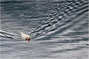 FB-F_1601_224508-Hundeschwumm-Jaeggli_Thomas-OL.jpg