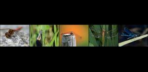 BR-XF-LK2-Libelle-Seematter_Beat.jpg