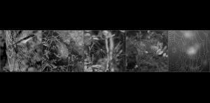 SB-XF-LK2-Spinnennetze-Schibler_Judith.jpg