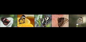 BR-XF-LK3-Papillon-Seematter_Beat.jpg