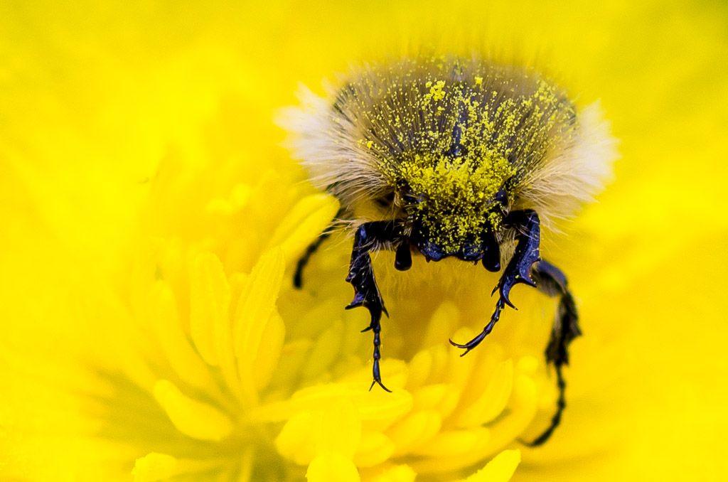 BI-DF-LK1-Pollinisation-vonBallmoos_Joelle.jpg