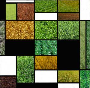 BI-DP-LK3-composition_agricole_2013-vonBallmoos_Pierre.jpg