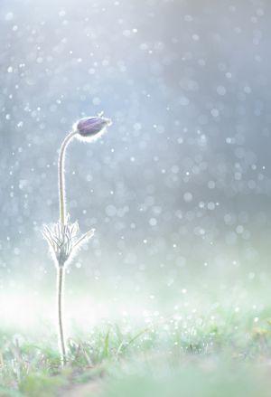 BR-DP-LK4-In_The_Rain-Pfammatter_Matthias.jpg