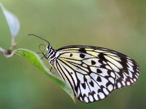 BI-FF-LK3-Papillon-Galloux_Vincent.jpg