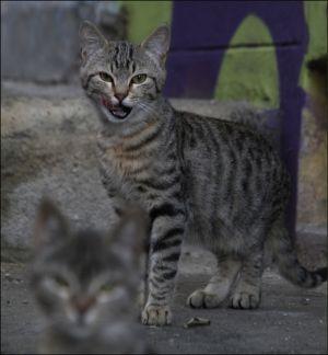 LZ-FF-LK4-Cat_brothers-Wiederkehr_Tiziana.jpg