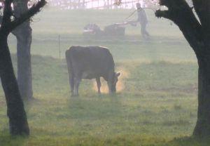 RH-FP-LK5-neblige_Landwirtschaft-Felix_Bruno.jpg