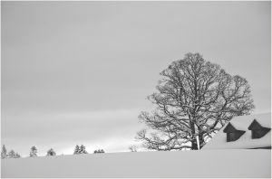 RH-SF-LK4-Schneelandschaft-Roth_Yvonne.jpg