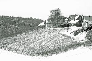 RH-SP-LK3-Weinbau_im_Thurgau-Sauer_Dieter.jpg