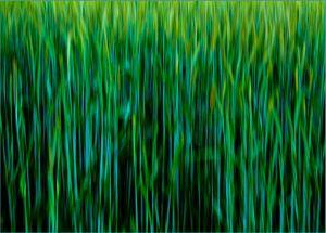 LZ-DF-LK2-Getreide-Amstutz_Karl.jpg