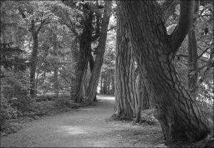 OL-SF-LK3-Waldweg-Christen_Margrit.jpg