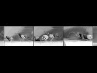 OL-XF-LK2-Tauben-Jaeggli_Thomas-0