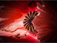 DI-F_1701_563601-poppy-Vogt_Sabine-BS