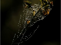 DI-F_1701_166408-Perlenketten-Leuppi_Hubert-OL