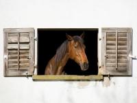 DI-F_1701_134507-Pferd_am_Fenster-Wiederkehr_Tiziana-LZ
