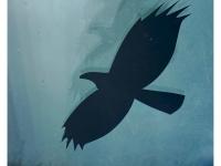 FB-P_1701_975501-Birds-Schaller_Thomas-BS