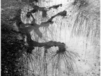 SW-P_1701_241609-Wasserspiegel-Weber_Barbara-RH