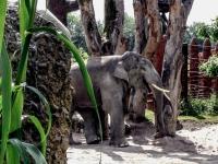 FB-F_1801_475505-lachender_Elephant-Kuonen_Oliver-BR