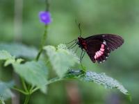 FB-F_1801_978505-Schmetterling-Eyer_Yvette-BR