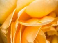 FB-P_1801_403910-Rose-Eggenberger_Silvia-SB