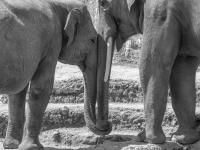 SW-F_1801_892310-Elefanten-Schibler_Judith-SB