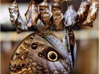 DI-P_1901_854910-Schmetterlingsverwandlung-Lippuner_Doris-SB