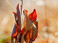FB-F_1901_119905-Herbst-Wyer_Adrian-BR