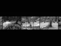 BE-XF-LK3-Wald-Zurbruegg_Urs-0