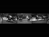 SB-XF-LK3-Pferderennen-Mueller_HansJoerg-0