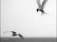 SW-F_1901_182305-Fluege-Catalano_Antonino-BR